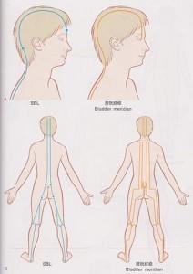 浅後線と膀胱経